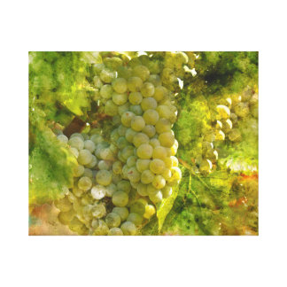 Chardonnay Grapes on the Vine Canvas Print