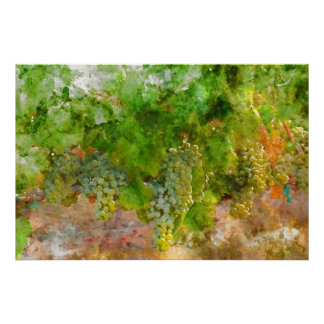 Chardonnay Grapes on the Vine Poster