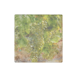Chardonnay Grapes on the Vine Stone Magnets