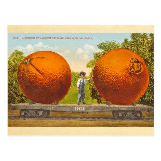 Charge d'un wagon d'oranges navel gigantesques - c cartes postales