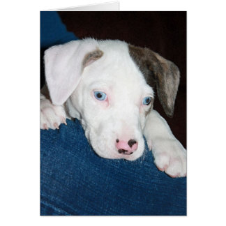 Chari The Catahoula Puppy Card