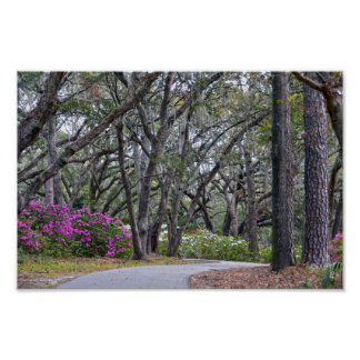 Charles Town Landing Path, South Carolina Poster