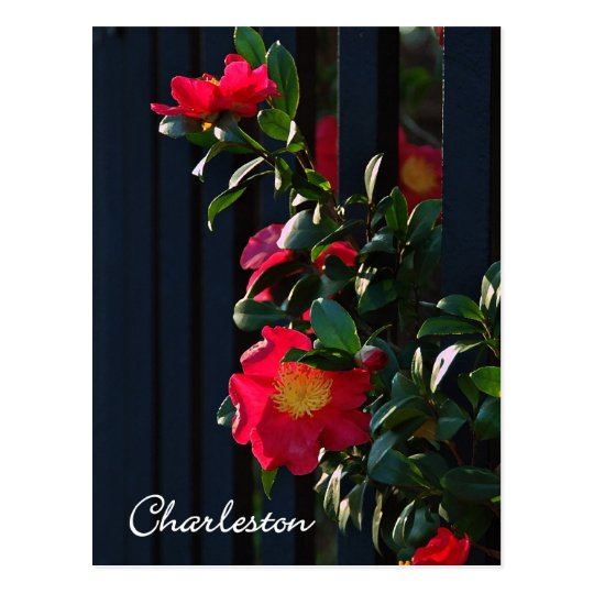 Charleston Camelia Postcard