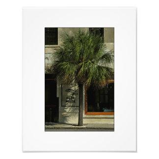 Charleston Street with Palmetto Tree Photo Art