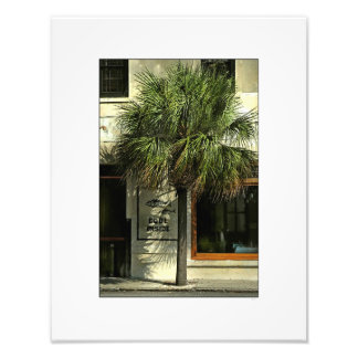 Charleston Street with Palmetto Tree Photo Art