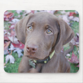 Charley: Autumn Leaves 3 Mousepad