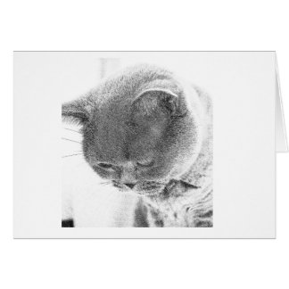 Charlie: Sketch from photo of a British Blue cat Card