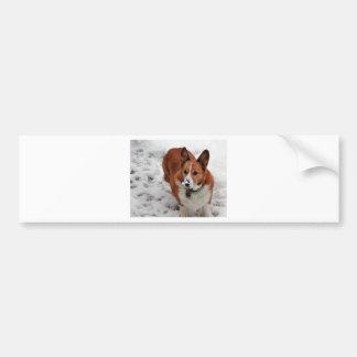 Charlie Snow Snout Bumper Sticker