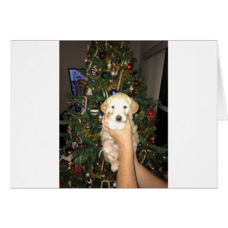 Charlie The GoldenDoodle Puppy on Christmas Card