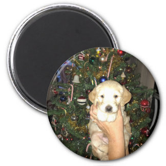 Charlie The GoldenDoodle Puppy on Christmas Magnet