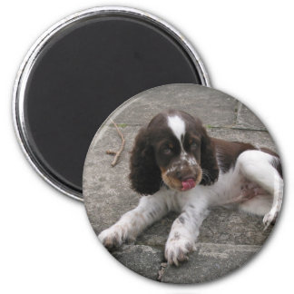 Charlie The Springer! Magnet