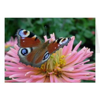 Charming Butterfly Card