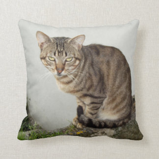 Charming   cat   Cushion