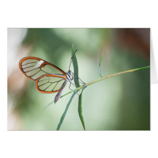 Charming Clear-wing Card