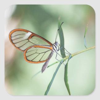 Charming Clear-wing Square Sticker