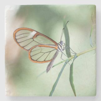 Charming Clear-wing Stone Coaster