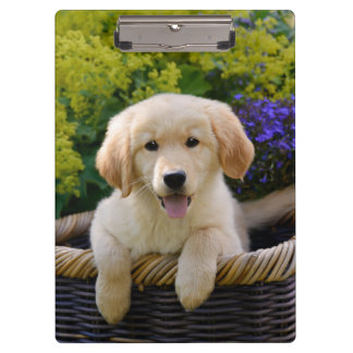 Charming Goldie Retriever Dog Puppy Photo Portrait Clipboards