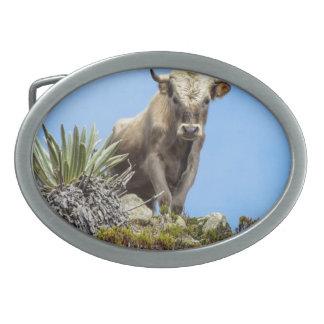 Charolais Bull Belt Buckle