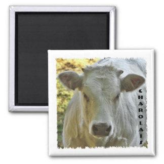 Charolais cow magnet