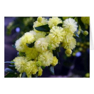 Chart Acacia - Mimosa Card