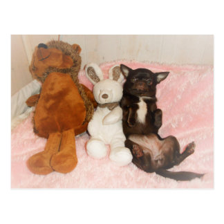 chart maroon chihuahua teddy cuddly toys humour postcard