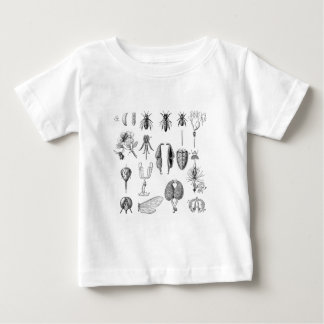 Chart of Insect Parts Baby T-Shirt