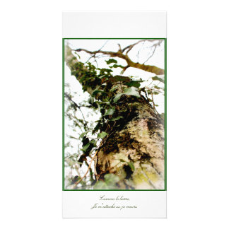 chart photo green tree foams ivy forest wood card