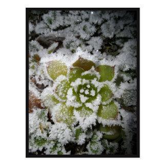 chart tallies black nature winter snows cactée postcard