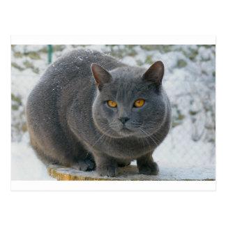 Chartreu in snow postcard