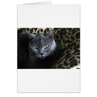 Chartreux  (karthuizer) card