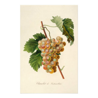Chasselat de Fontainebleau Stationery