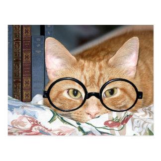 Chat avec des verres et des livres carte postale