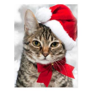 Chat de Noël au casquette rouge de père Noël Carte Postale