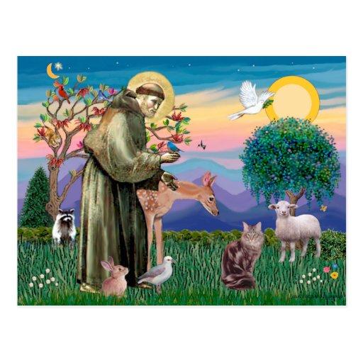 Chat de ragondin du Maine - St Francis Carte Postale