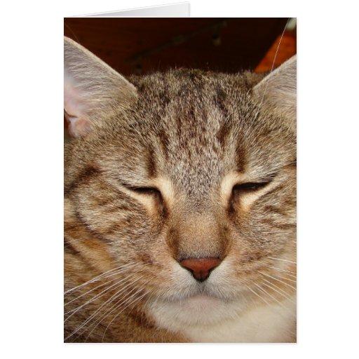 Chat de tigre tigré carte de vœux
