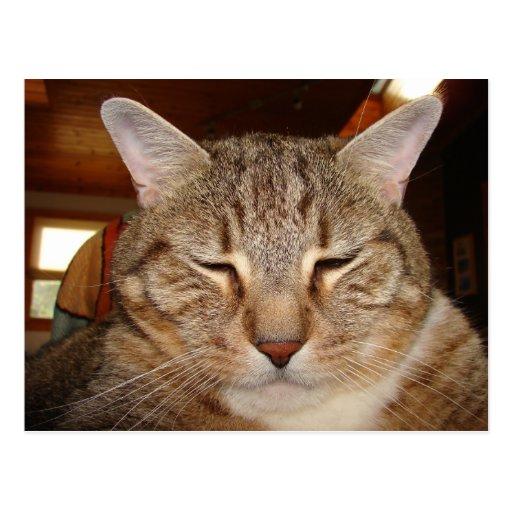 Chat de tigre tigré carte postale
