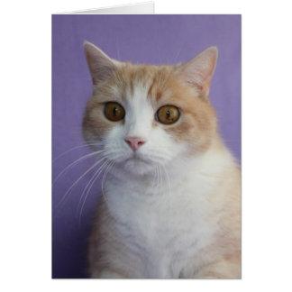 Chat drôle personnalisable/encouragement de Kitty Carte De Vœux