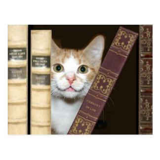 Chat et livres carte postale