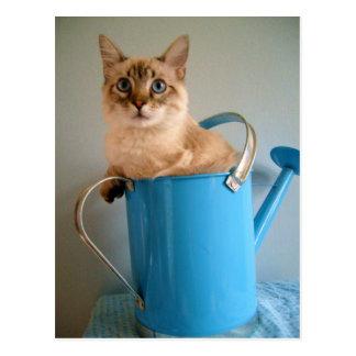 Chat magnifique dans la boîte de l'eau carte postale