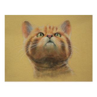 Chat sauvage écossais carte postale
