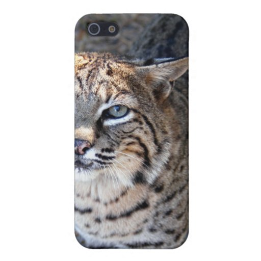 Chat sauvage i coques iPhone 5