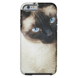 Chat siamois coque tough iPhone 6