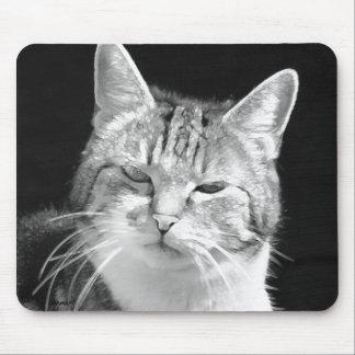 chat tapis de souris
