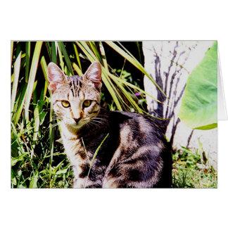 Chat tigré dans le jardin carte