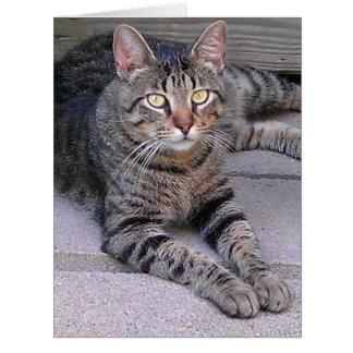 Chat tigré de Brown Carte De Vœux