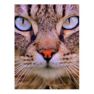 chat tigré de photo cartes postales