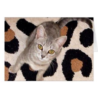 Chat tigré gris carte