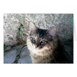 Chat tigré gris cartes de vœux
