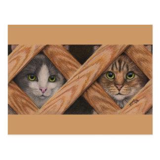 Chat tigré gris de chats derrière la carte postale