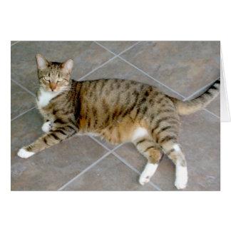 Chat tigré gris et blanc cartes de vœux